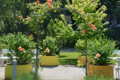 Domski park